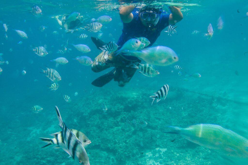 7月相當推薦到沖繩離島浮潛或是潛水
