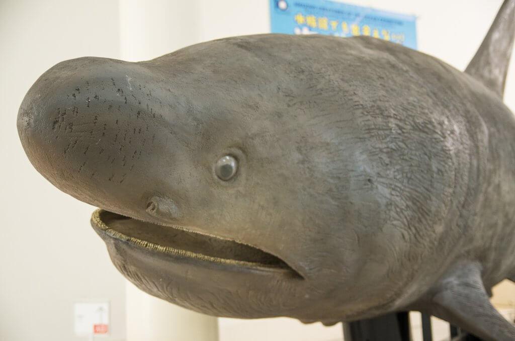 沖繩限定|美麗海水族館也看不到?!海洋驚奇生物展