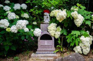 【茨城景點】二本松寺繡球花之杜x感受上百種繡球花一起綻放