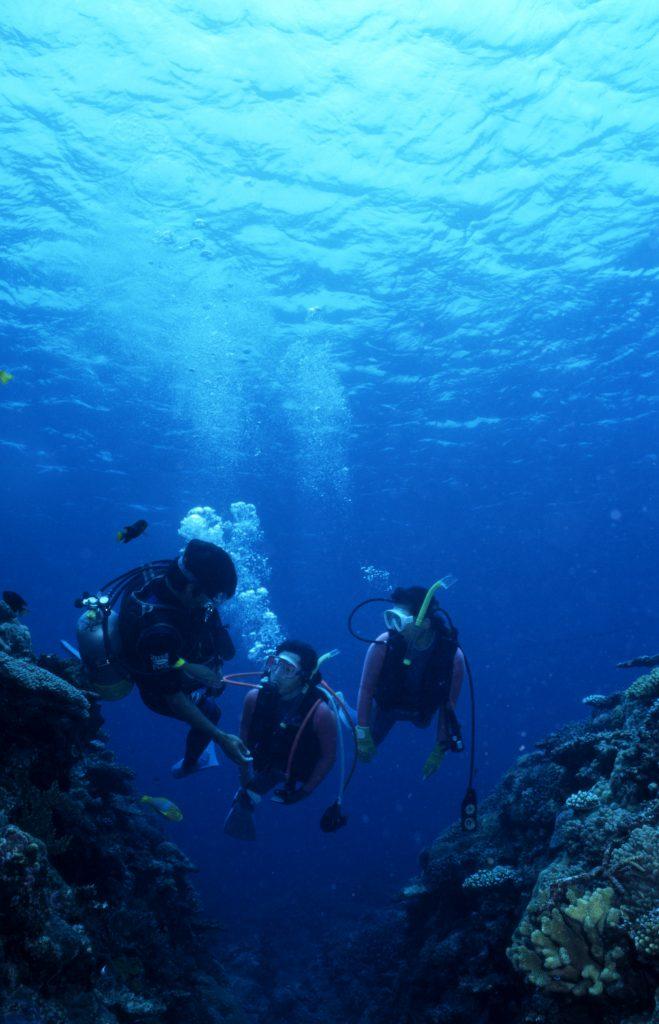 來沖繩深潛前會有許多疑問