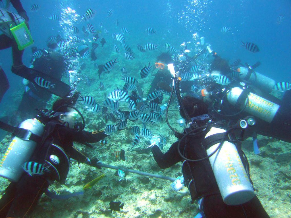 參加沖繩潛水活動
