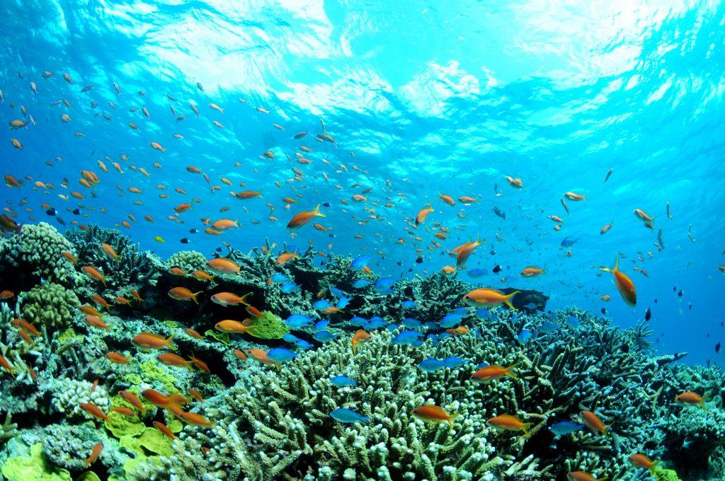 選到好的深潛店家才能看到美麗的海景