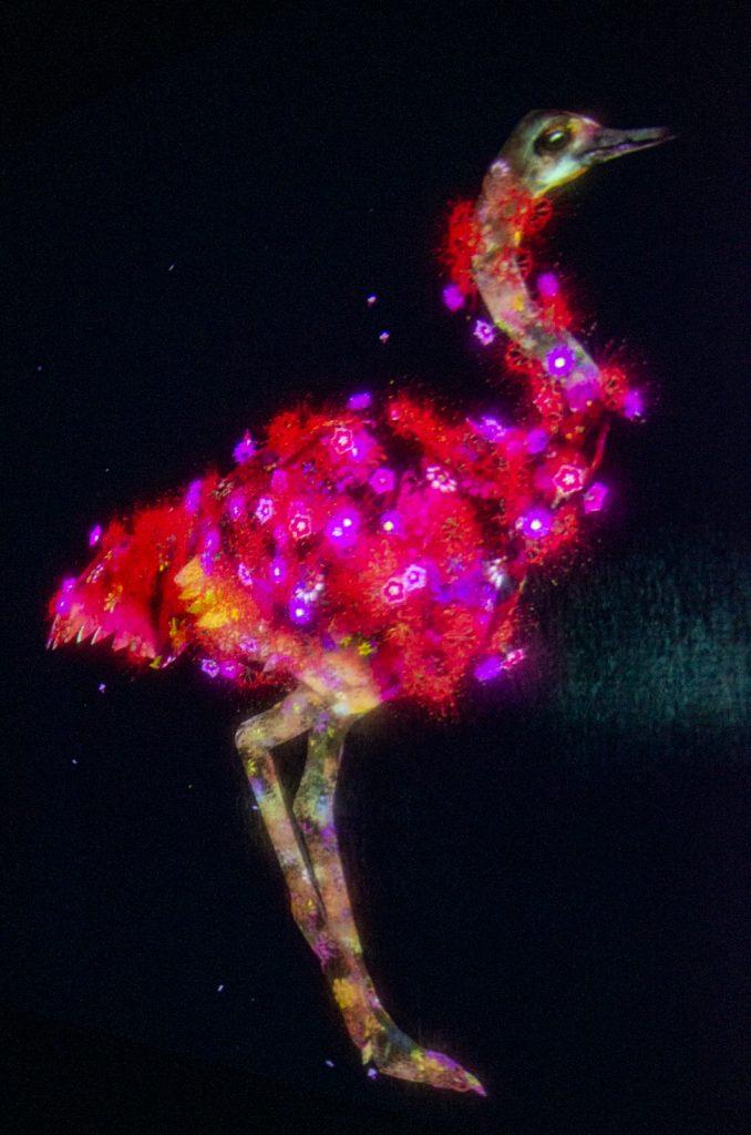 teamLab Borderless數位藝術美術館鴕鳥造景