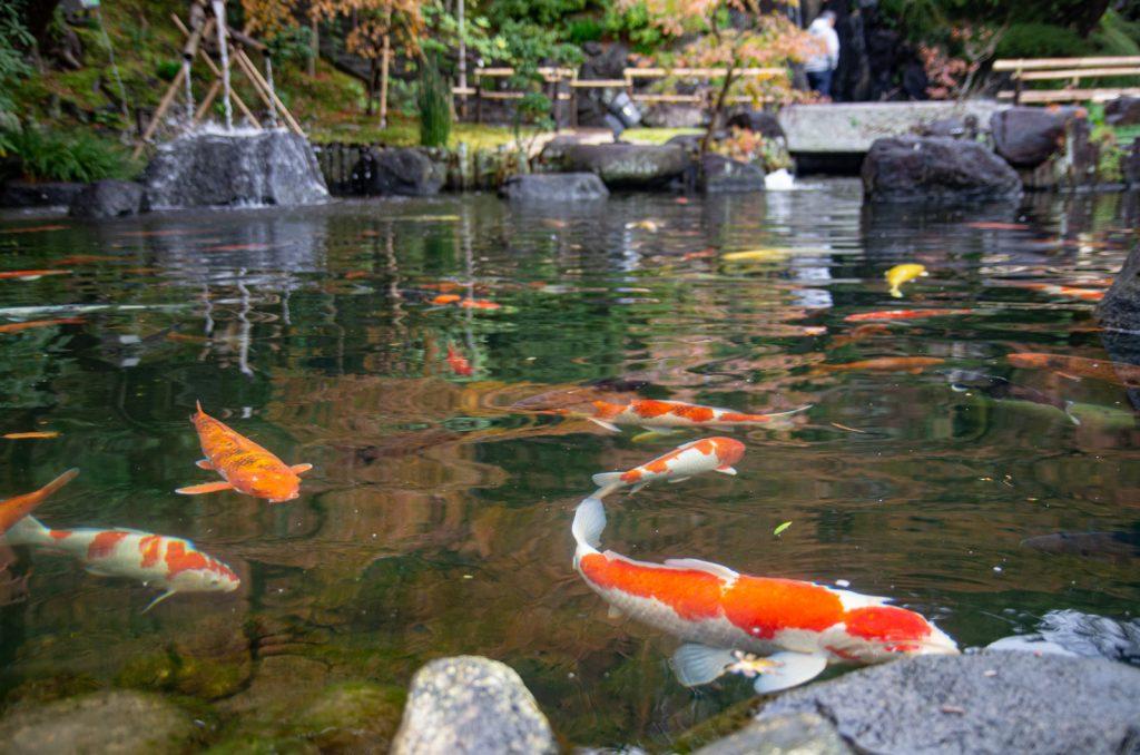 長谷寺鯉魚池