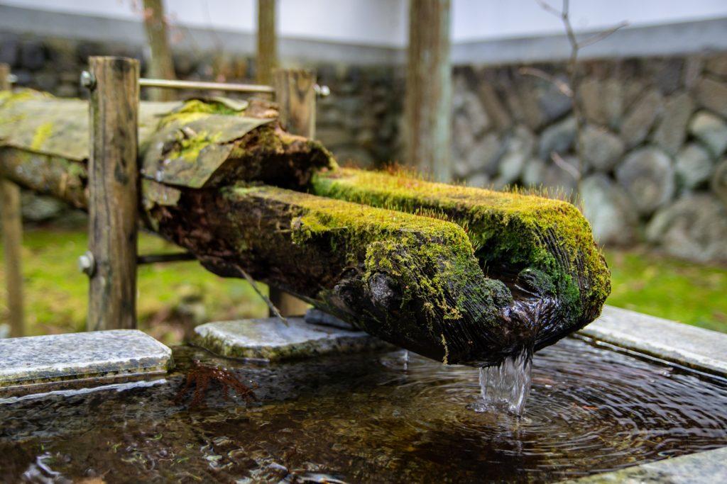 水道上的青苔