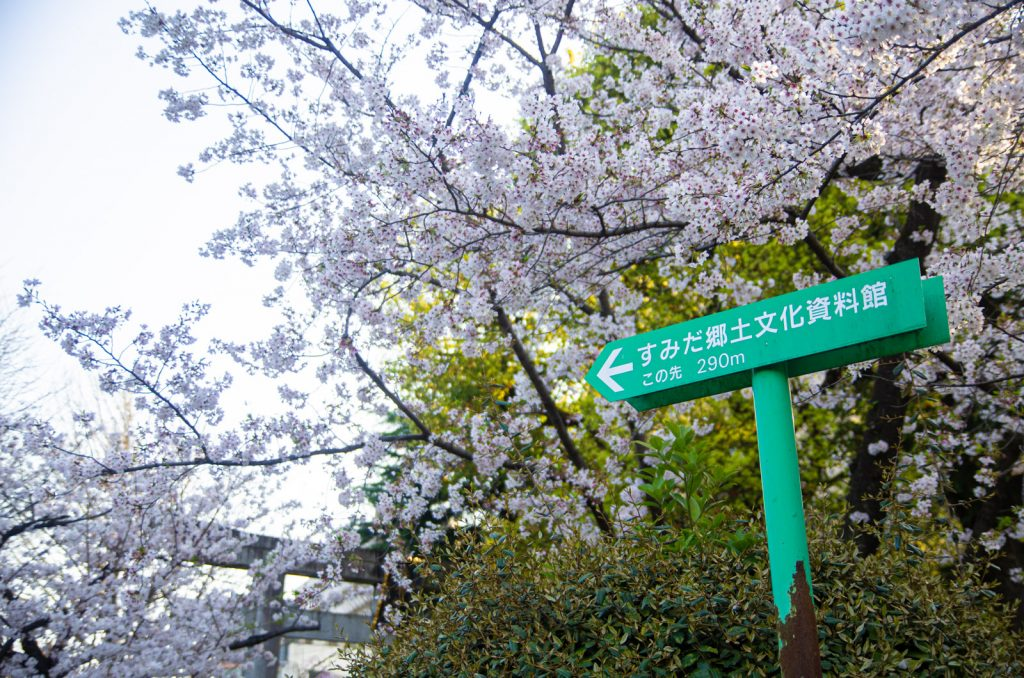 墨田鄉土文化資料館與櫻花